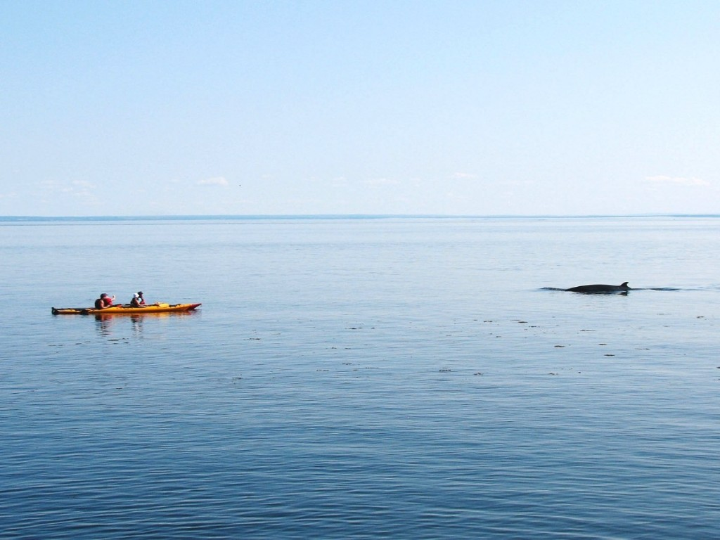Photo of ocean kayakers seeing a dolphin in the water